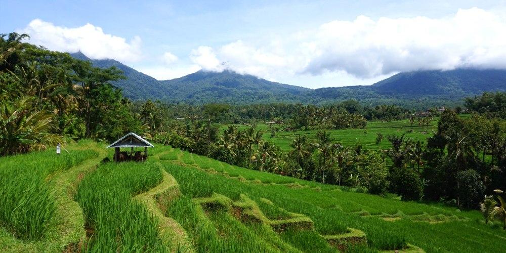 Indonesie Bali Jatiluwih.JPG