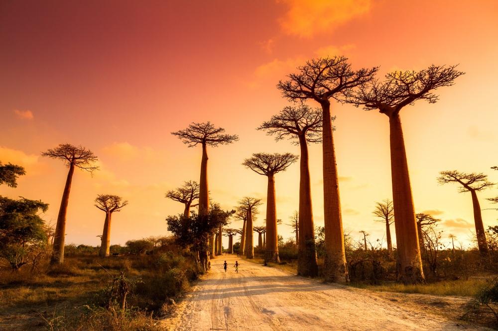 Baobabs avenue.jpg