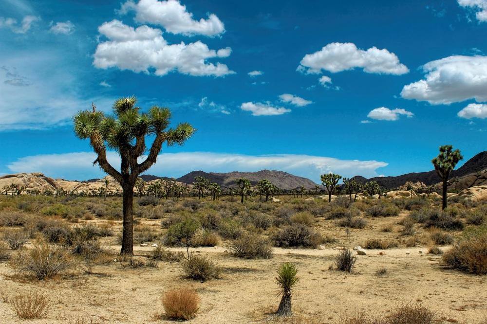 Mojave.jpg