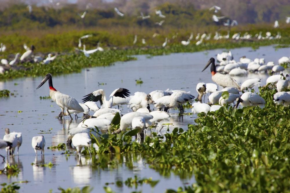 Pantanal 2.jpg