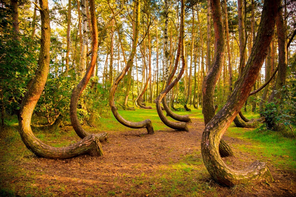 Crooked Forest